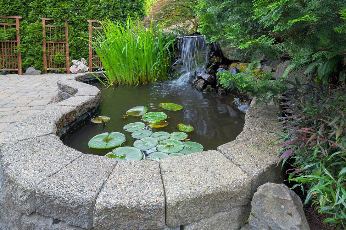lawn water features lotus pond